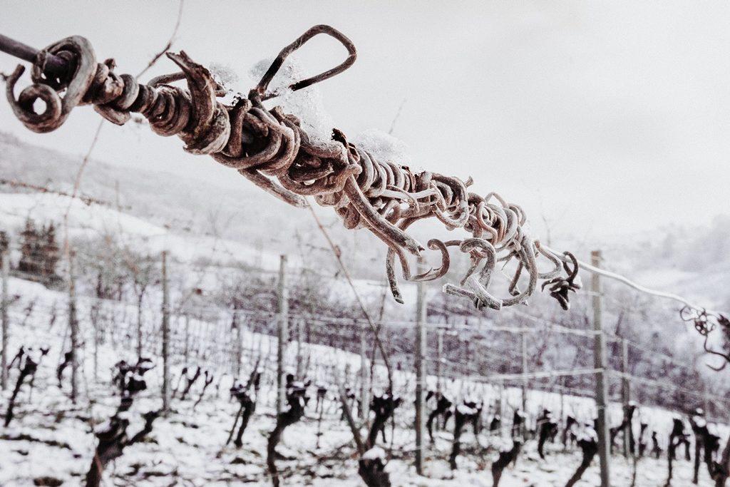 002-diana-tischler-fotografie-winterland