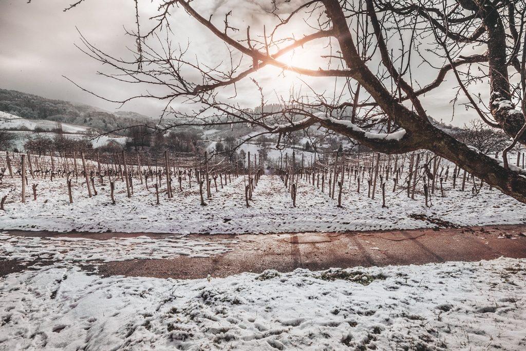 003-diana-tischler-fotografie-winterland