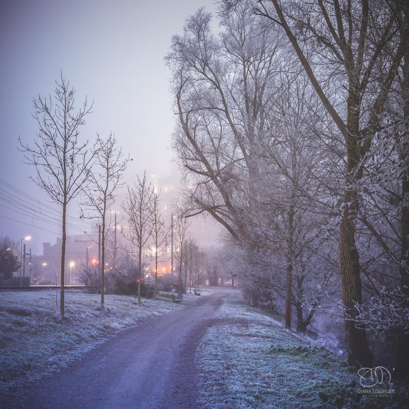 dianatischler_winterland-3
