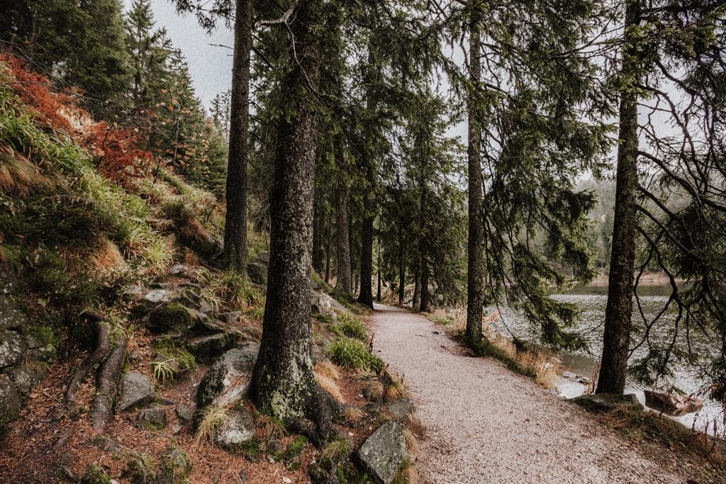 Herbst im Schwarzwald II