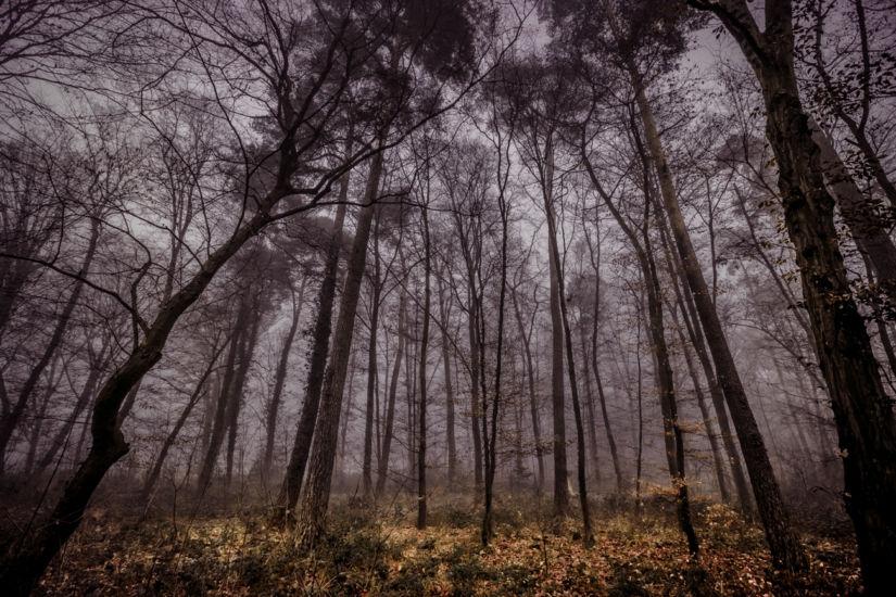 diana-tischler-fotografie-herbstwald (1)